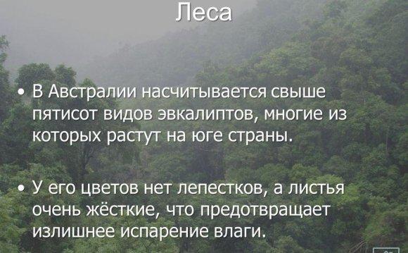 5 Леса